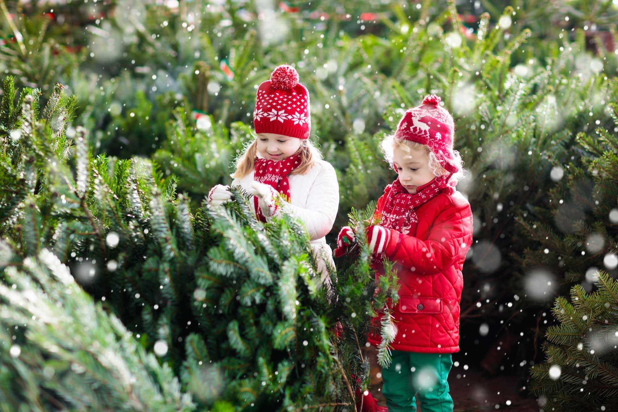 kids-at-christmas-tree-lot